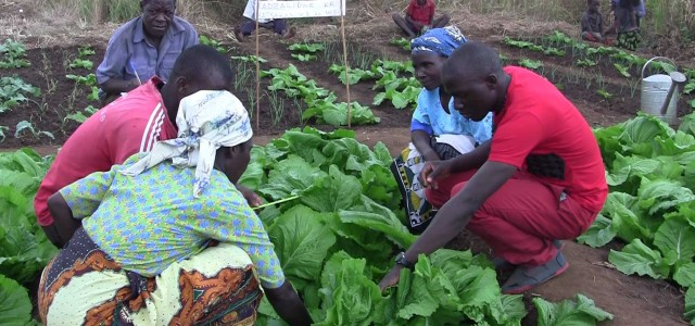 By Cedric Nyoni As a way of providing sustainable and long term response to people whose livelihood was affected by this year's flood disaster, The Catholic Development Commission in Malawi […]